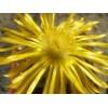 Рекомендації по догляду за кактусами