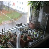 Зимове утримання кактусів