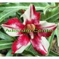 Семена Adenium Obesum Desert rose CELLONA