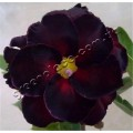 Семена Adenium Obesum Desert rose DOUBLE DARK CHOCOLATE