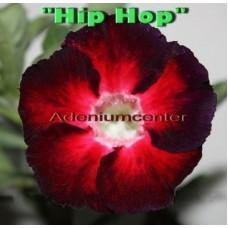 Насіння Аденіум Тучний HIP HOP
