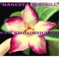 Насіння Аденіум (Adenium) Obesum MAGENTA WINDMILL