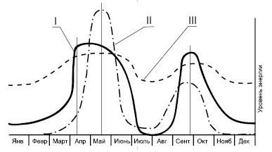 діаграма життєдіяльності кактусів