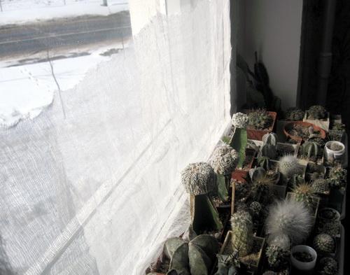 весняне утримання кактусів